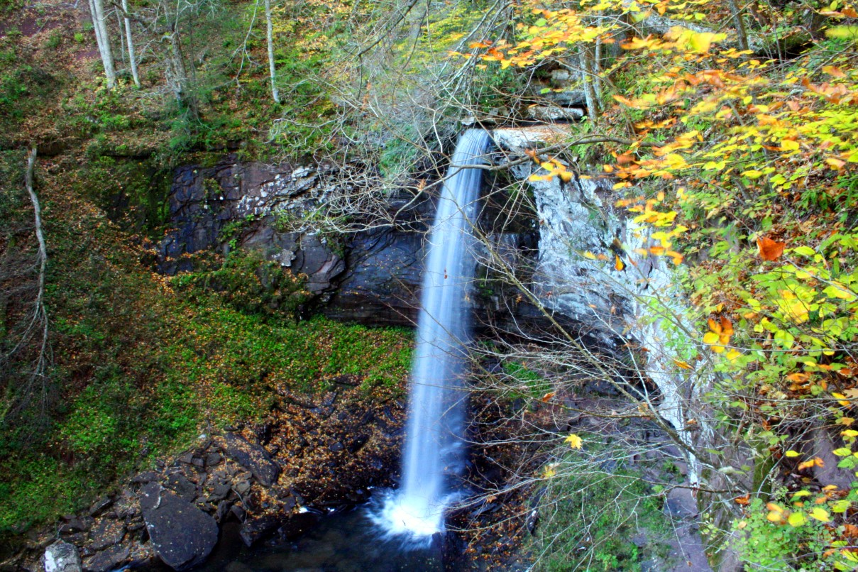 http://www.forestwander.com/images/Hills_Creek_waterfall.JPG