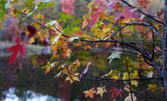 Autumn Tree Leaf Colors Bokeh Lake