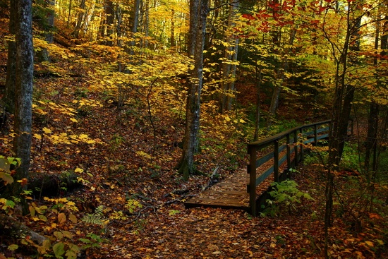 fall foliage wallpaper. Fall Foliage Forest Foot Trail