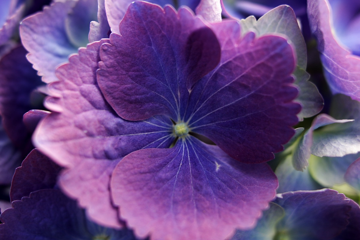 Blue Purple Flower Flowers Free Nature Pictures By Forestwander