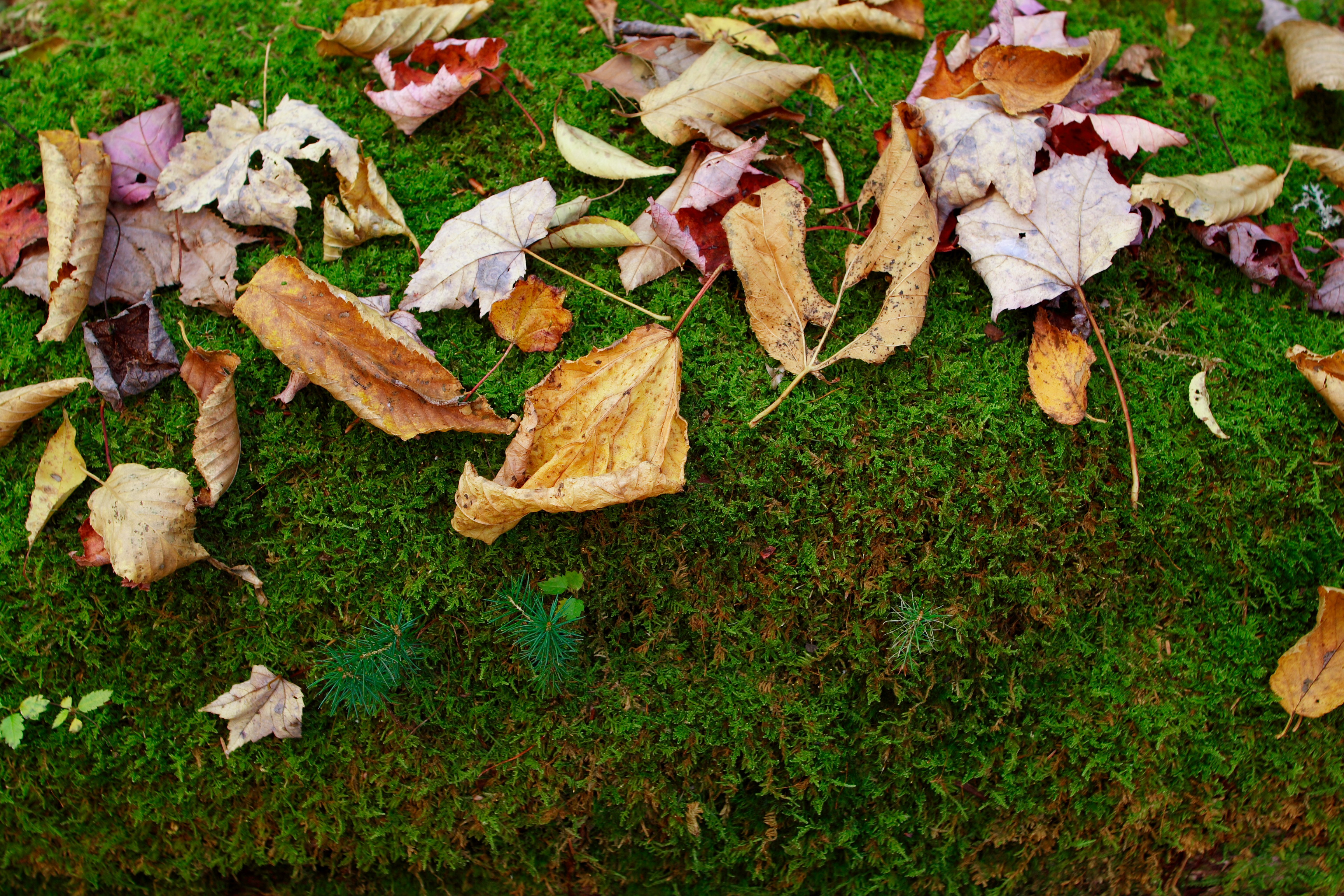 autumn leaves moss foliage free nature pictures by forestwander