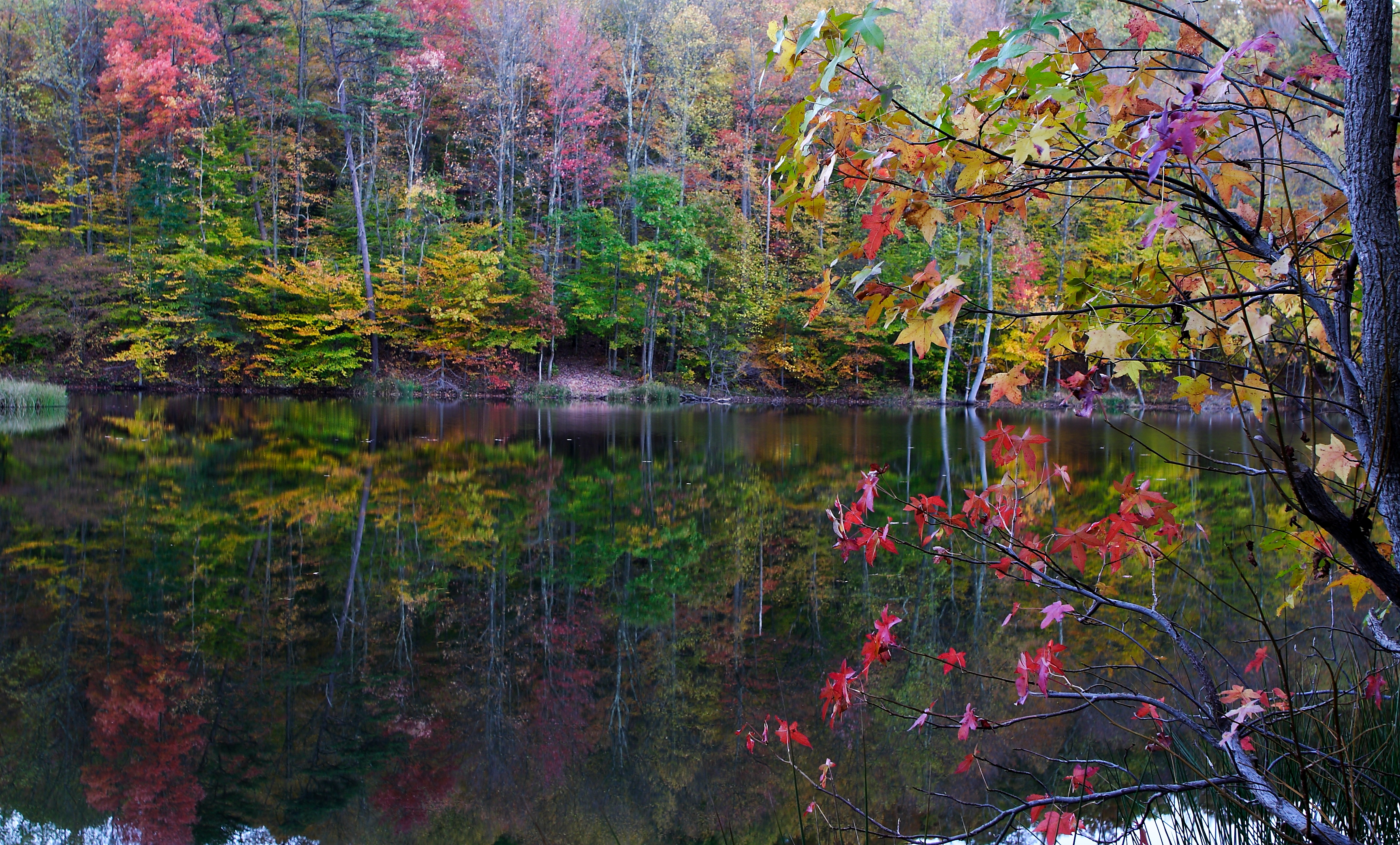 autumun tree leaves reflecting lake trees free nature pictures by