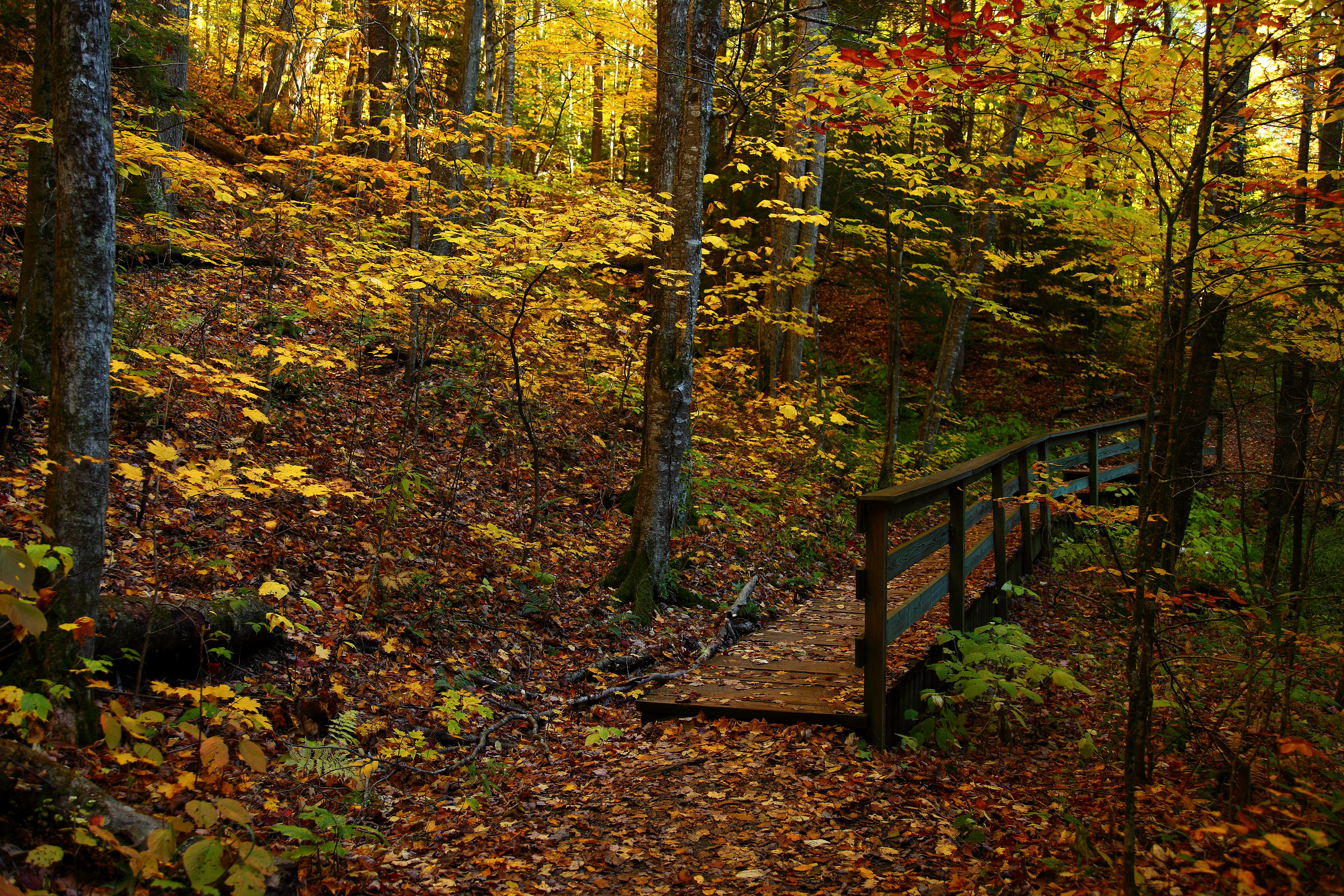 Forest Trail Wallpaper Fall Foliage Forest Foot Trail